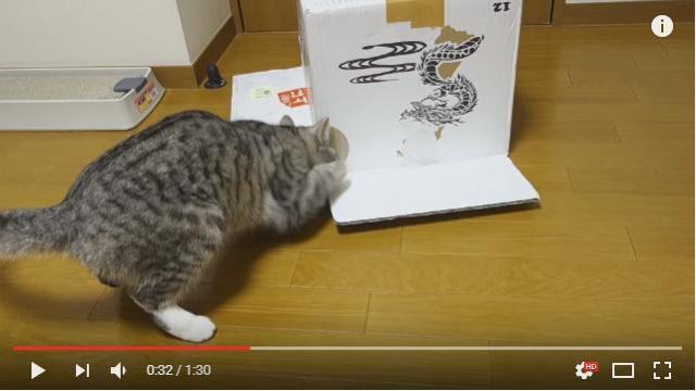 「お姉ちゃんを助けなきゃ!」ダンボールの中に閉じ込められたニャンコを救出する猫さん