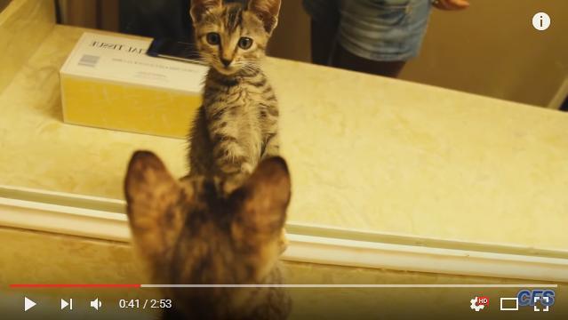 犬が「動」なら猫は「静」! 初めて鏡を見た子猫ちゃんたちのじーーっと見つめる様子が可愛すぎ♪