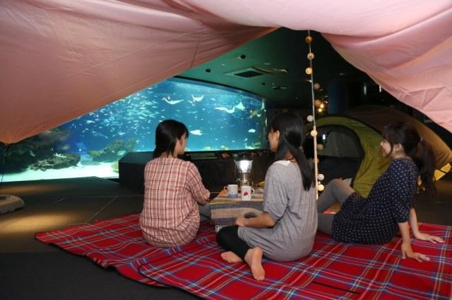 夜のサンシャイン水族館でお泊まり女子会はいかが♪ バックヤードツアーやお酒を交えながらのオトナトークも!
