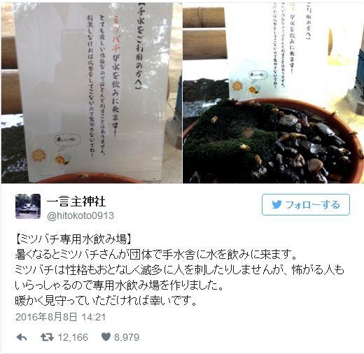 茨城の神社が「ミツバチ専用水飲み場」を設けて話題です / ネットの声「そのお気持ちが優しいですね」