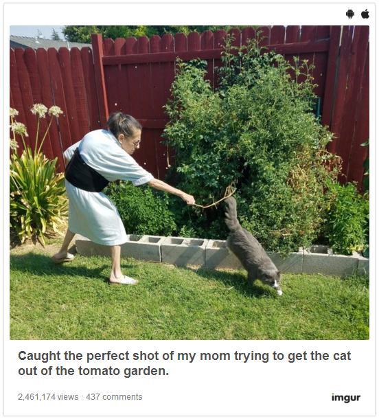 お題は「猫を追い払う老婦人」写真! フォトショップ職人の腕が光るフォトショバトルがはーじまーるよーっ