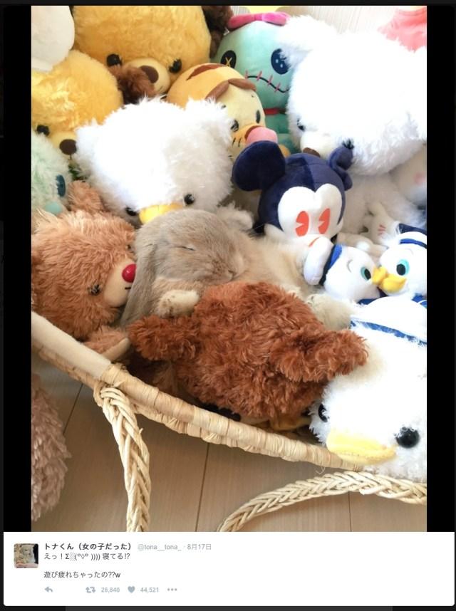 ぬいぐるみに埋もれて眠るウサギさんがたまらなく可愛い〜♪ どこにいるか見つけられる?