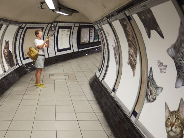 駅をねこ・ネコ・猫で埋め尽くそう! 広告をぜんぶニャンコの写真にしてしまいました