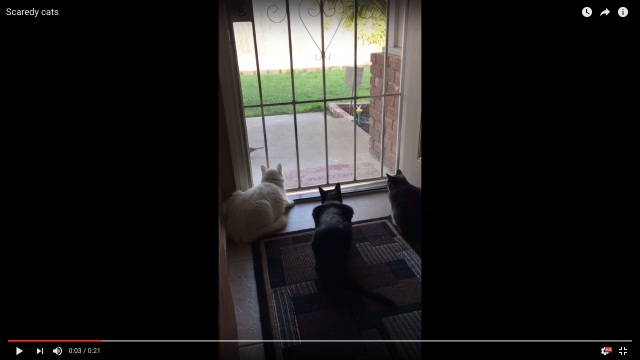 窓の外の鳥をまったり観察している3匹のニャンコ / 10秒後に災難が降りかかります