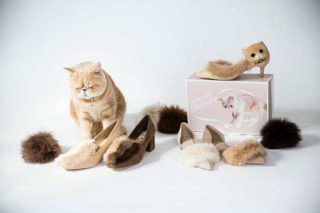 超人気猫マッシュと「RANDA」がコラボ! もっふもふのファーパンプスがかわいすぎて争奪戦の予感しかしないっ!!
