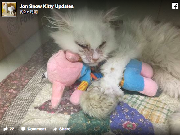 【奇跡】安楽死寸前のボロボロな子猫…寄りそって看病した結果現れたのは「まっしろふわふわ美猫」!!