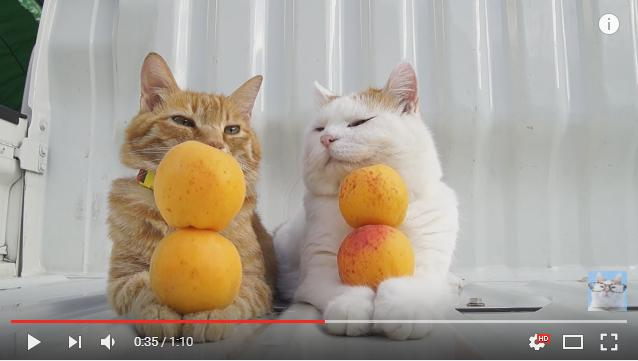 【検証】ねむねむニャンコのもふもふお手手に「黄桃」を乗せたら起きる? それとも起きない?