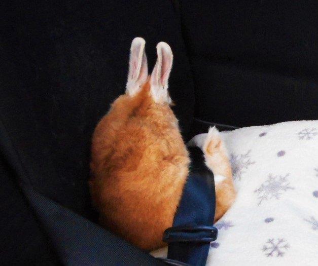 車の中でなぜか「おっきなカニ爪フライ」が発見されたと話題になってるよ / しかも激モフで激かわじゃないですかッ!!!