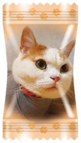 キャンディの個包装に愛猫がプリントされちゃうかも!? フルーツキャンディ「にゃんコレ」でうちねこ写真を募集中だよ☆