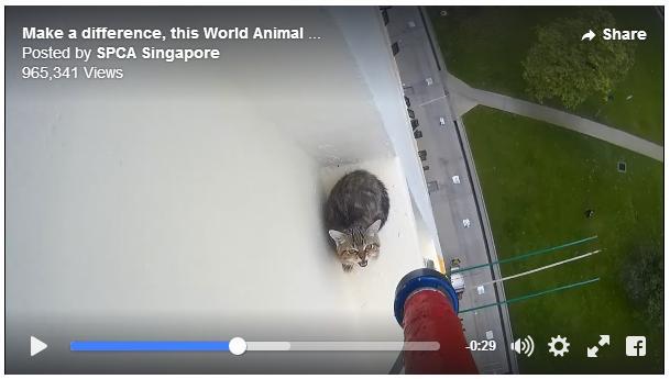 【緊急ミッション】12階から落ちそうな子猫を救出せよ! 助かるってわかっていてもドキドキします…
