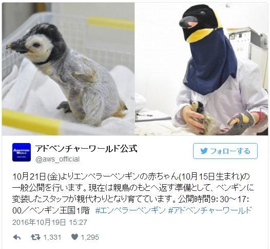 【マジかよ】ペンギンの赤ちゃんを育てているのはペンギン人間 / ヒトを親だと認識させないための変装なんだよ