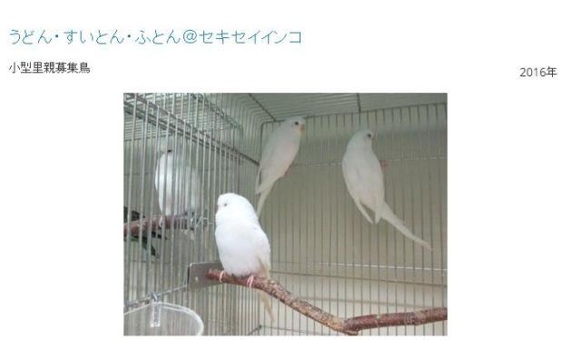 うどん、すいとん、ふとん…これみんな鳥の名前!? 鳥の里親探しを行う団体のネーミングセンスが独創的!