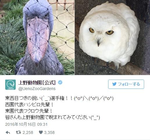 ハシビロコウ先輩 VS フクロウ先輩の仁義なき戦い…上野動物園の「東西目つき鋭い選手権」マジでパねえのはどっち!?