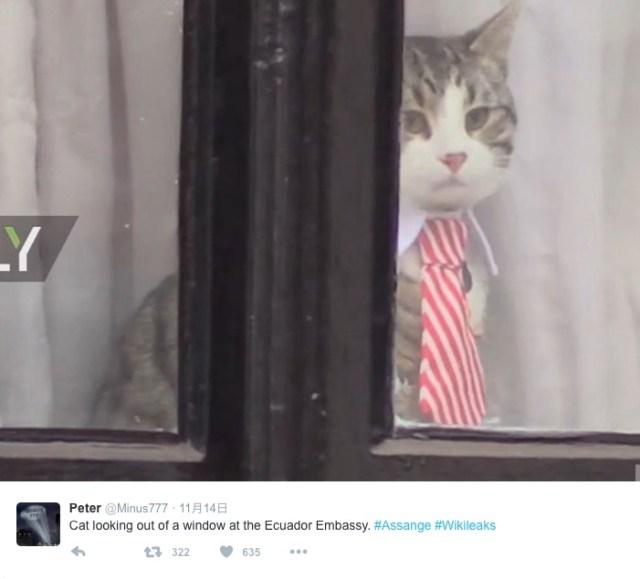 ロンドン・エクアドル大使館で暮らすニャンコさんがオシャレすぎる! 「ネクタイ&白襟でビシッとキメてみたニャ」