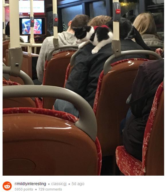 マフラー…かと思いきや、本物の猫やないか!! 肩に猫を乗せてバスに乗る男性が激写される