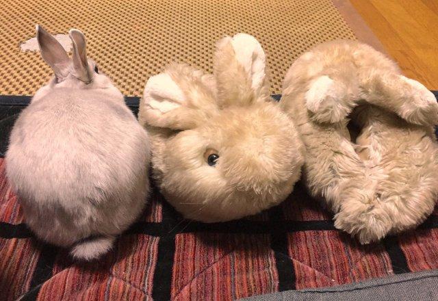 【胸キュン】 スリッパを仲間だと思い込んだウサギさんのかわいすぎる勘違いに萌え萌え