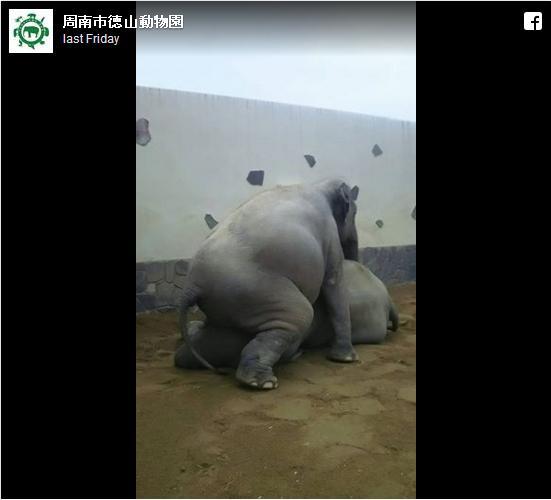 妻が夫にマウント!? 動物園が公開したゾウ夫婦のコミュニケーション方法にジワジワ