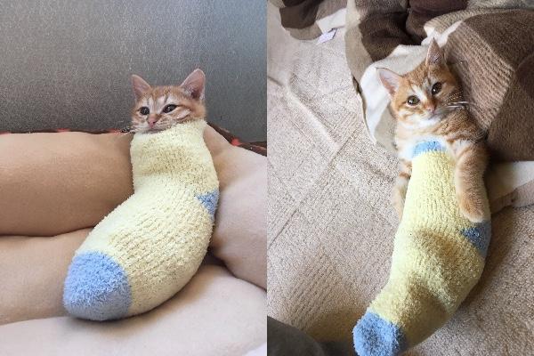 寒いから靴下を履くニャ♪ ニャンコがもこもこソックスを履いた結果…ぶっ倒れるぐらいかわいい物体が完成したと話題です