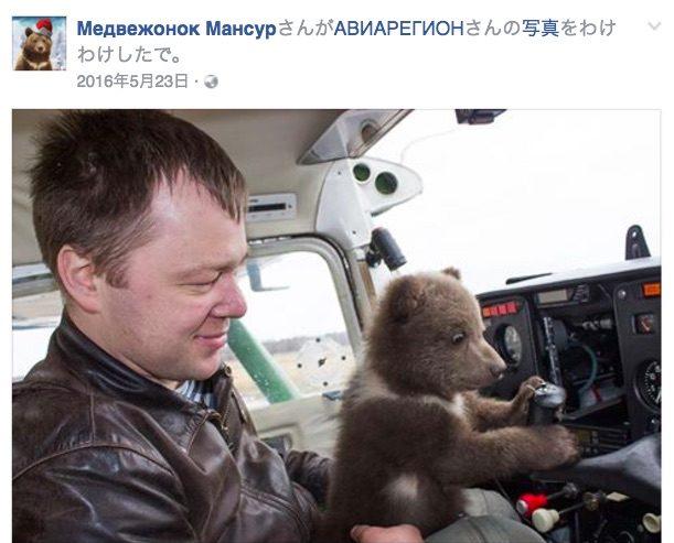 ぬいぐるみ! ロシアの飛行場で暮らす子グマがみんなに愛されてスクスク成長中です