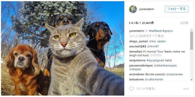 上手にセルフィーできる猫・マニーくんの写真がリア充すぎる / 人間顔負けの構図で仲間と一緒に「ハイチーズ!」