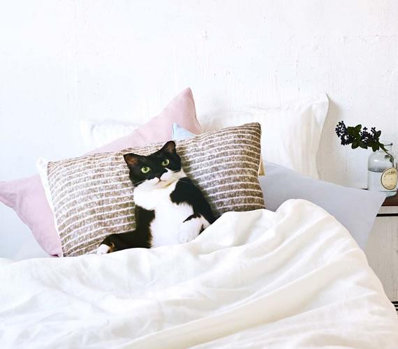Twitterで人気のニャンコ「ギズモさん」と添い寝できる! 今すぐベッドに飛び込みたくなる枕カバーが誕生したよ♪