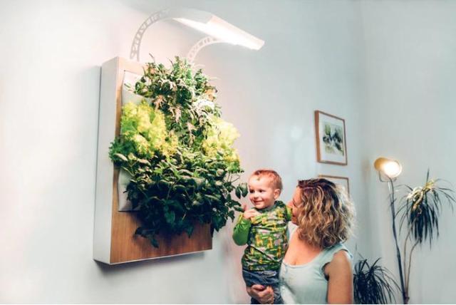 お部屋でおしゃれに家庭菜園を楽しめる! 壁掛け式の絵みたいな植物を育てるアイテム「Herbert」