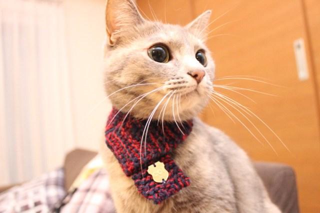 まだまだ寒いニャ! 冬のニャンコの首元を守る「ネコマフラー」はオシャレであったかだよ
