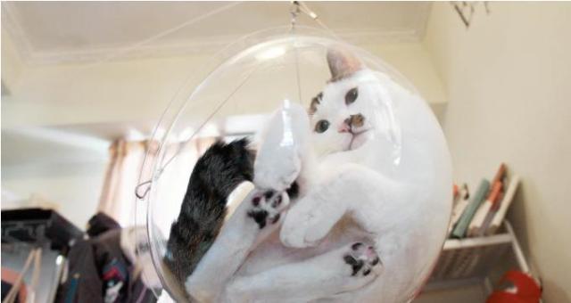 愛猫のあんなところやこんなところがぜーんぶ丸見え! 無色透明なニャンコさま専用カプセルチェア