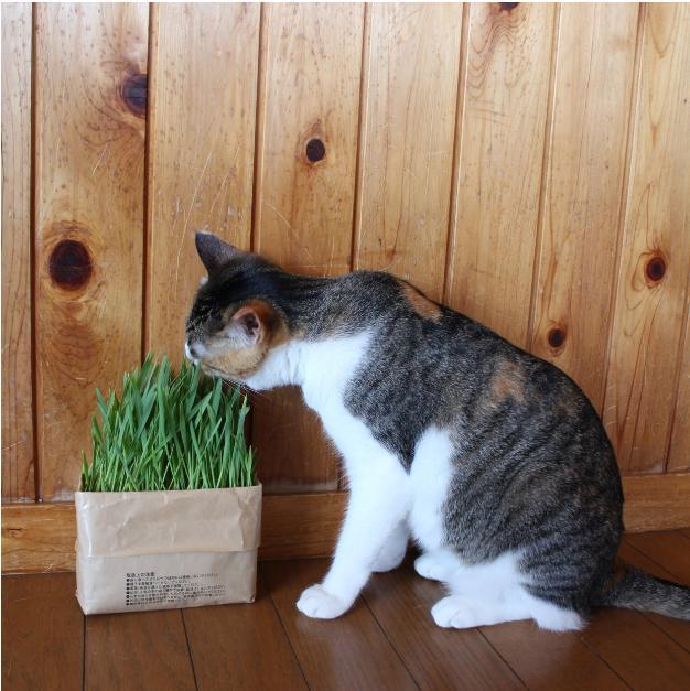 無印良品PRイチオシの「猫とラブラブになれるグッズ」5選を紹介♪ 猫サマ向けアイテムから猫を飼っていない人が楽しめるグッズもあります【2月22日は猫の日】