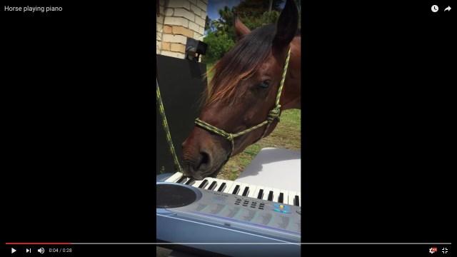 【超絶技巧が炸裂】馬のピアノがウマすぎて…なぜか聴いてるとくすぐったくなる名演奏をお聴きください!