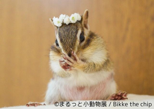 小動物が主役の合同写真&物販展「まるっと小動物展」がきゃわゆ~い♪ SNSで人気のハムスターやハリネズミ、リスが大集合だよ!
