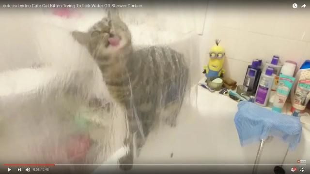 猫さん、それ逆側です! シャワーカーテンの水滴を舐めても全然喉の渇きが癒えない猫