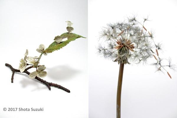 金属で作ったとは思えない…風に舞う桜やタンポポの綿毛を繊細に表現した造形作家・鈴木祥太さんの作品が美しい