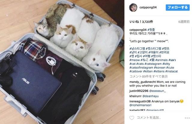 「わたしらのスタンバイはOKですニャ!!」飼い主さんがスーツケースを用意してたら4匹の飼い猫が同行する気満々だった