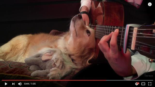 【至福の表情】優しい音色にウットリ…ご主人が演奏するギターにぴたーっと寄り添うワンコ