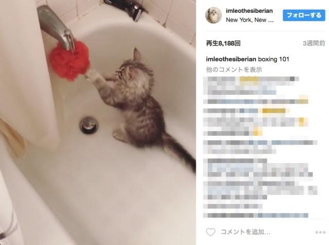 練習相手は泡立てスポンジ! お風呂場で子猫が「秘密の猛特訓」しとる現場を押さえたゾ