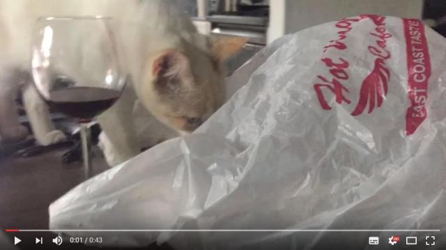 【大惨事】スーパーの袋に興味津々の猫さん…スルスルと中に入った瞬間!!!!