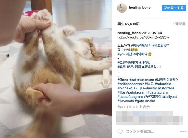 【気前良すぎ】あられもないお姿でブラッシングされる猫さんがかわいくてしょーがない動画