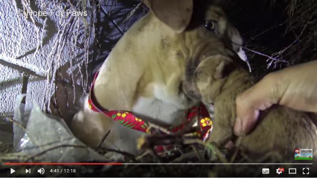 嵐の中に取り残された母犬と子供たちを救出する瞬間…お母さんワンコの行動に泣けてしまいます