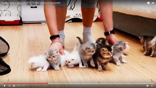 こんな苦悩なら味わいたい! 10匹の子猫を並べるのがいかに大変かがわかる動画