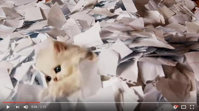 【癒やしの2分】大量の紙が空から降ってきたーっ! 子猫ちゃんズ、大興奮してハッスルしまくるの巻