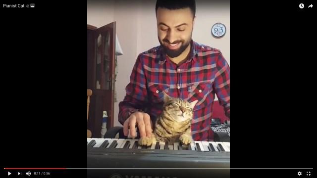 「ピアノの連弾するニャ!」飼い主と連弾したい猫さん、前足を押してあげないと音が出ないうえに眠ってるの巻