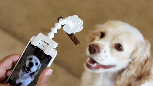 間違いなく「ペットのカメラ目線ショット」が撮れる便利グッズを発見♪ ワンちゃんの視線の先にあるのは…