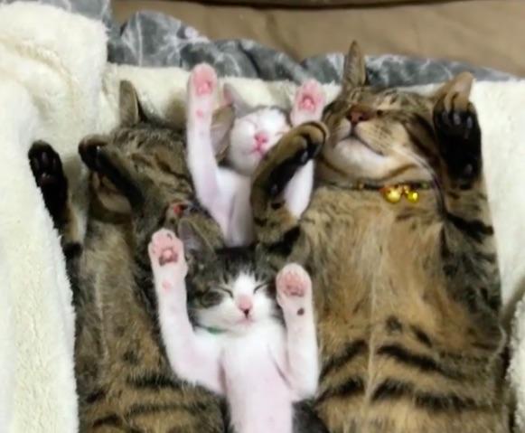 お揃いのバンザイ姿で眠るニャンコたちが幸せそうで可愛い! …だけどこの子達は壮絶な過去を持っていたのです