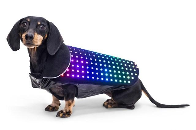 【1匹エレクトリカルパレード】ワンちゃんの体がピカピカ光る☆ 事故防止に&迷子対策にもなる「ワンコ用LEDベスト」がきゃわゆい