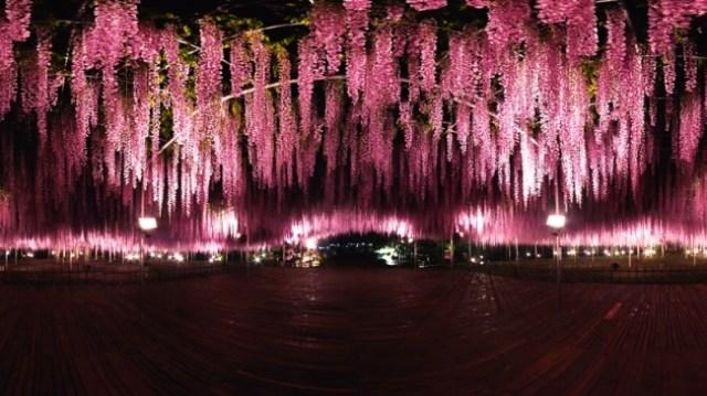 あしかがフラワーパーク名物「藤の花」の360度VR動画が別世界のような美しさ / CNNの「世界の夢の旅行先10カ所」にも選ばれた絶景です
