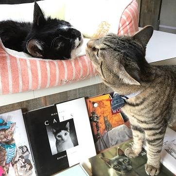 【店員は保護猫】三軒茶屋に猫の本ばかりを集めた本屋が誕生 / 売上から猫の保護活動にあてられるんだって
