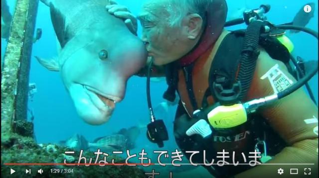 【リアル人魚】79歳 現役潜水夫の大親友は「コブダイの頼子」 弱っているところを助けて以来、約30年の仲なんだって