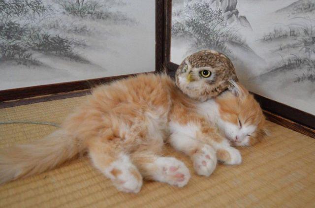 【毛づくろいする仲】子猫とフクロウのモフモフツーショットがかわいいでござる♪ 癒まぜて欲しくてたまらないよー!!!
