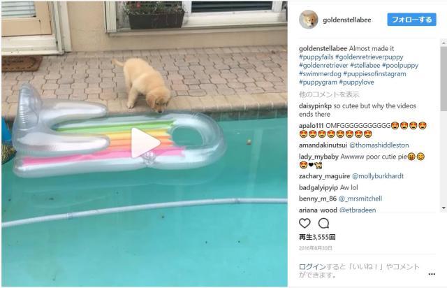 「浮き輪ボートに乗りたい!」子犬が勇気を出してプールサイドから飛び移ろうとしたものの…
